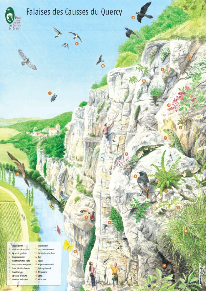 Affiche_biodiversité
